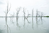 Dead trees in lake.