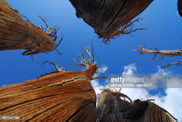 Dead trees in the sky