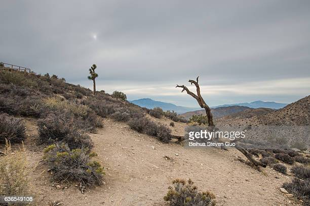Dead Trees Near Keys View in Joshua Tree National Park