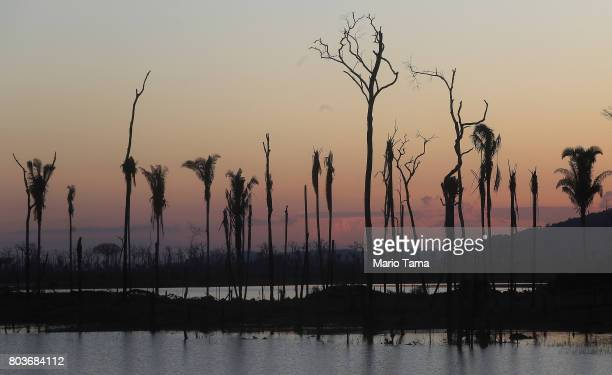 Dead trees stand in a recently deforested section of the Amazon on June 25 2017 near Abuna Rondonia state Brazil Deforestation is increasing in the...