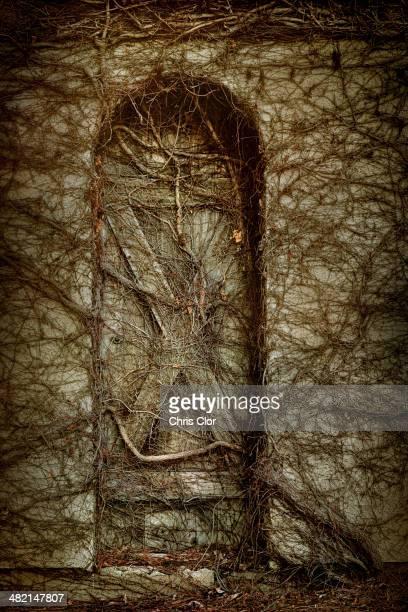 Dead vines covering door