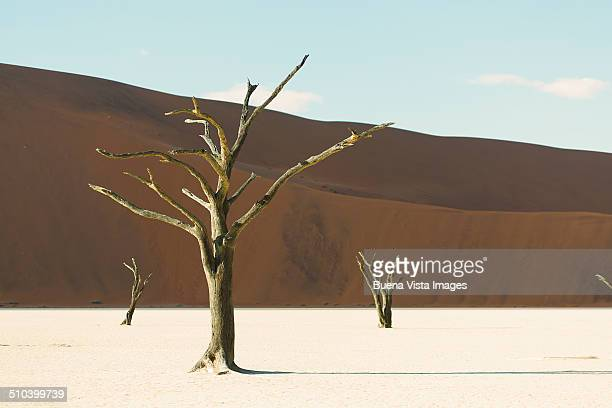 Dead Vlei. Dead trees in the desert.
