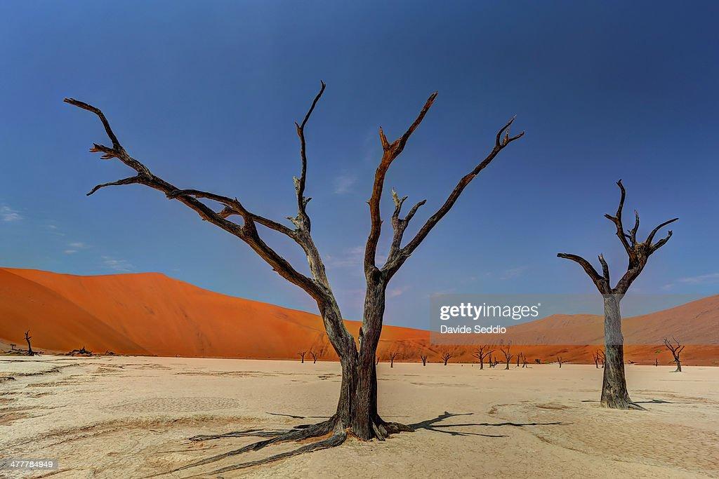 Dead vlei trees