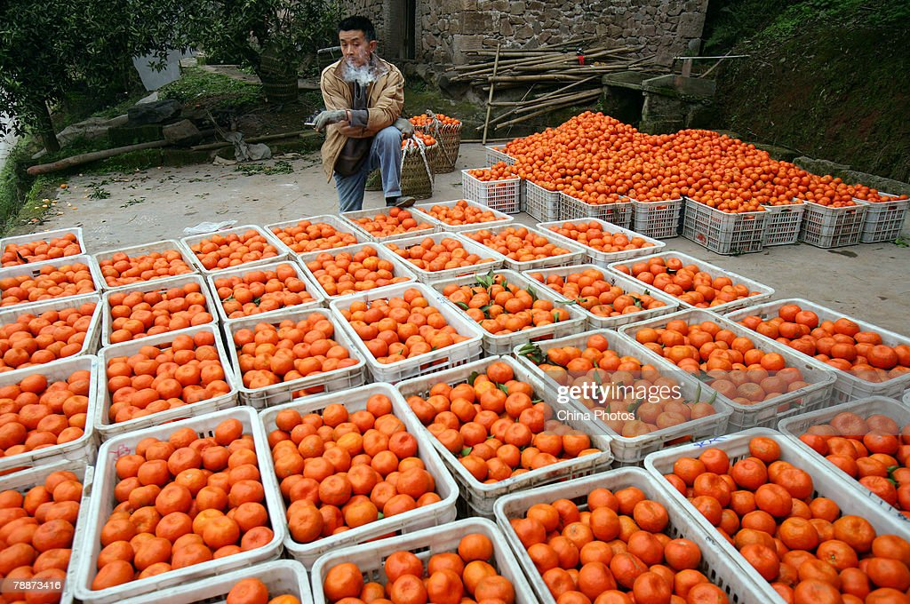A dealer waits for merchants in an orange purchasing station at the Yanjing Township on January 10, 2008 in Chongqing Municipality, China. Farmers in Yanjing Township, a major orange growing region have suffered huge losses this year due to a bumper harvest and price hikes of capital goods. Oranges are often going unsold or for their purchasing price of 0.4 yuan (about 5 US cent) per kg. Over 10,000 tons of oranges are going rotten in fields.