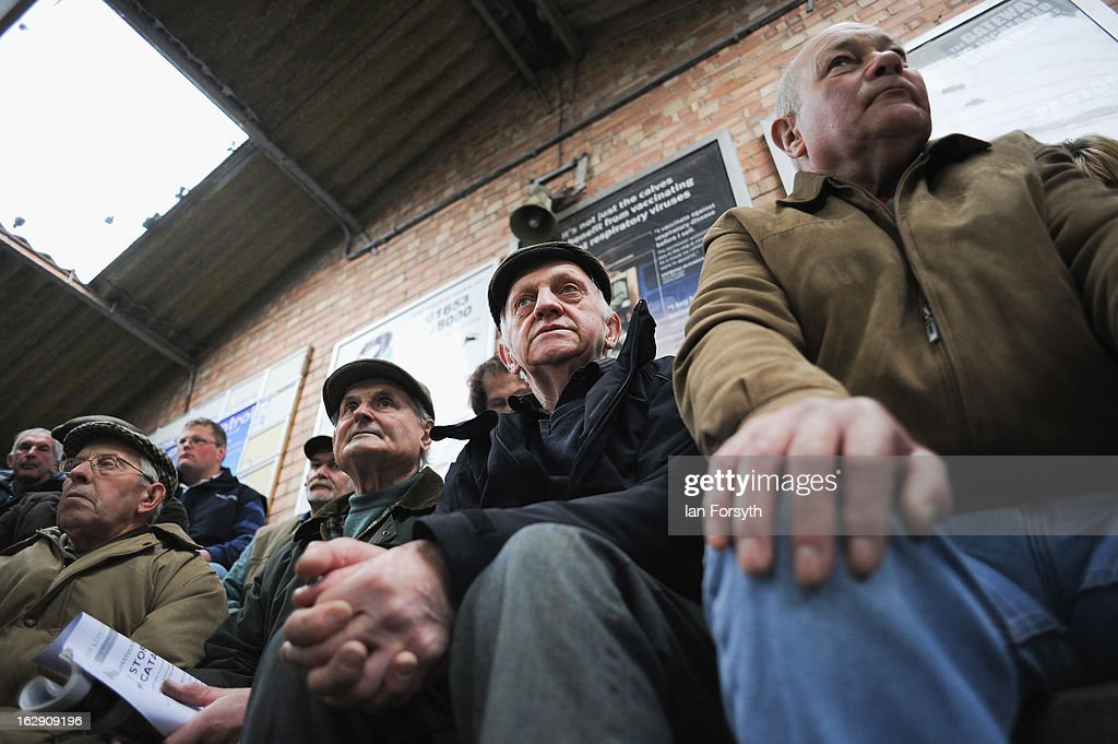 Dealers look on as livestock are bought and sold at a busy auction on March 1, 2013 in Malton, England. The auction takes place at Malton Livestock Auctioneers in the heart of Yorkshire and is one of the busiest in the country. In the wake of the horsemeat scandal British butchers and farmers are seeing a rise in demand for British reared meat, with Tesco's announcing at the National Farmers Union conference in Birmingham, that the world's third largest retailer would be buying more meat from its home market in Britain.