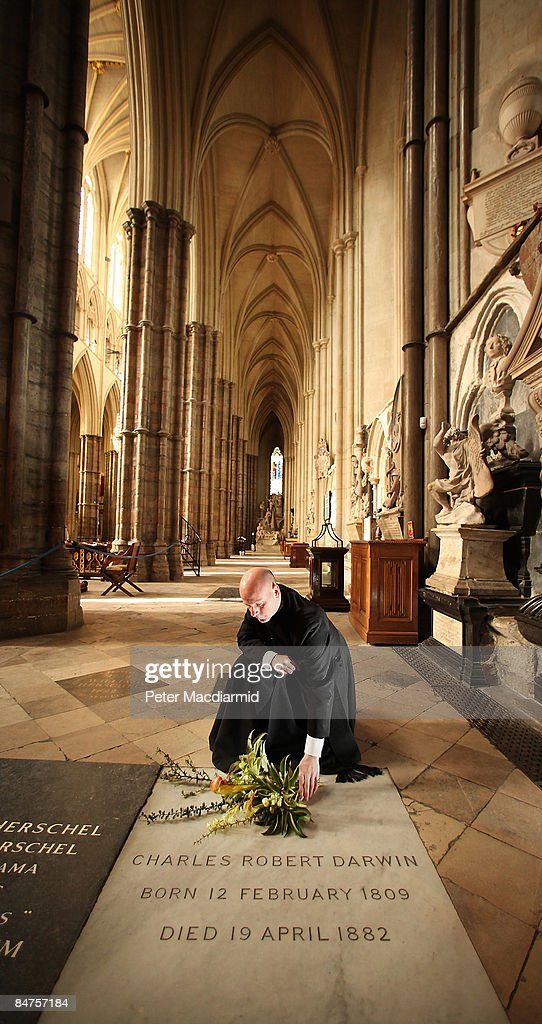 Dean's Verger Martin Castledine lays a wreath of plants from Charles Darwin's garden on his grave on the 200th anniversary of his birth at Westminster Abbey on February 12, 2009 in London. The Helleborus and Berberis Darwinii (discovered in South America in 1885 by Darwin during the voyage of the Beagle) placed on the grave of Darwin in the Abbey are taken from the garden of Down House in Kent - where he researched and wrote 'On The Origin of Species' published in 1859. An evensong followed by a wreath laying ceremony, attended by decendent's of Darwin, will take place tonight at The Abbey.