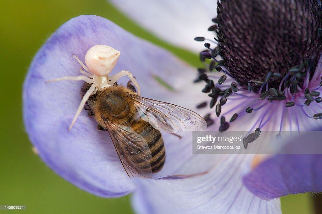 Death on flower : Stock Photo