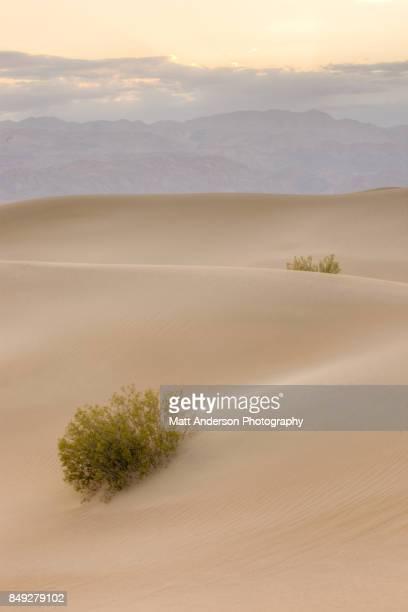Death Valley Sand Dunes 10