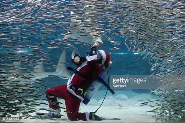 A Diver wearing a Santa Claus outfit swims with fish in a aquarium during a Christmas event at the Coex Aquarium in Seoul South Korea The aquarium...