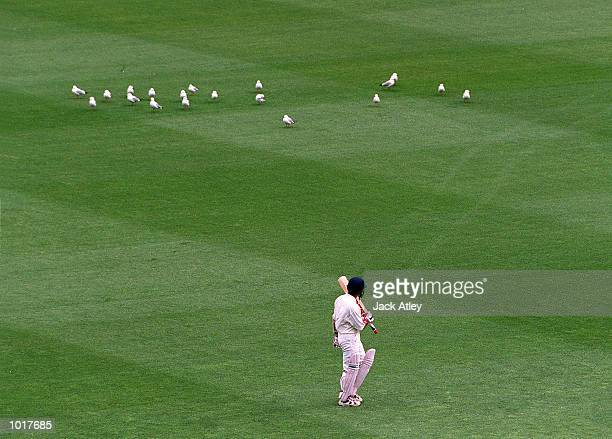 Seagulls look unimpressed as Indian captain Sachin Tendulkar trudges from the ground after being dismissed for 116 runs on day three of the second...