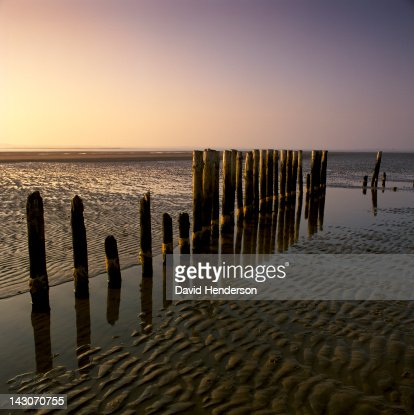 Decaying wooden posts on sandy beach : Stock Photo