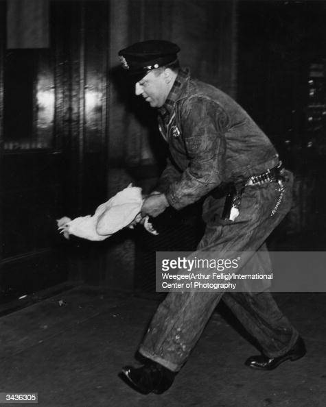 Bringing home the bird a policeman catches one of the 660 chickens which escaped when their truck crashed on Madison Avenue New York Photo by...