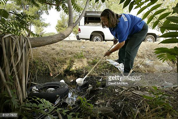 Dechenne Cecil a vector control technician with San Bernardino County scoops up mosquito larvae growing inside a tire in a pool of water as she...