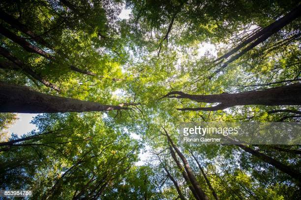 A deciduous forest is pictured on September 22 2017 in Goerlitz Germany