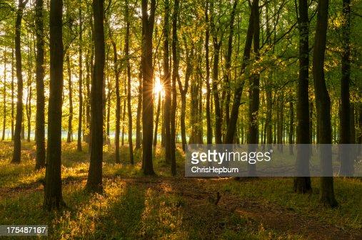 Bosque de hoja caduca