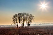 Taken in early morning hours during early winter. Several beautiful trees decorate uniform field.