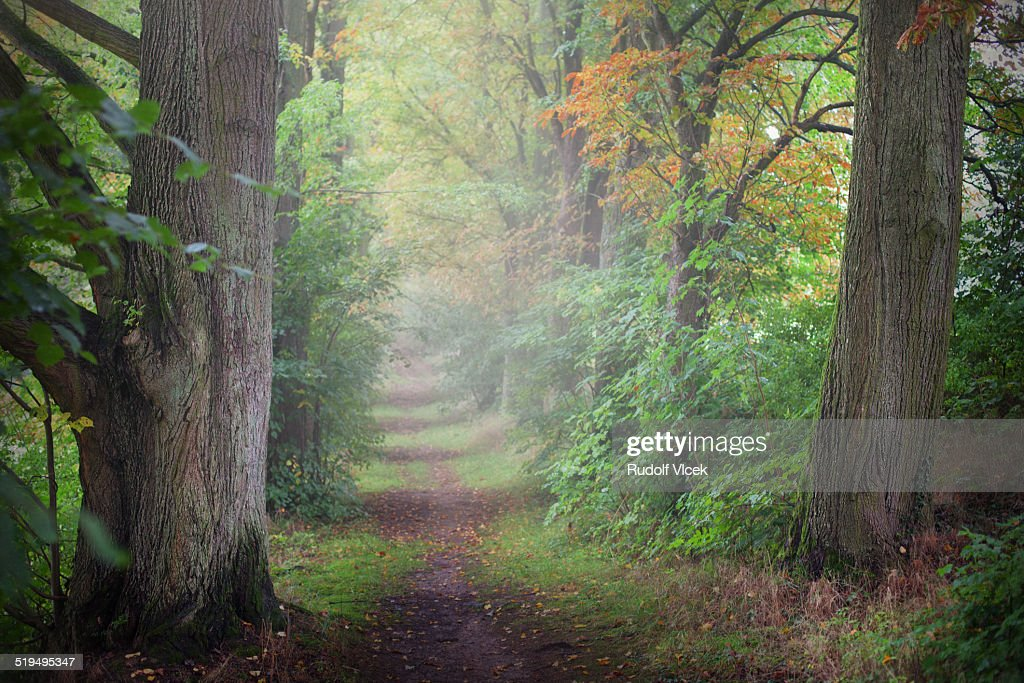 Deciduous trees lining country path