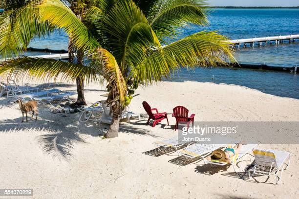Deck chairs and palm trees on tropical beach