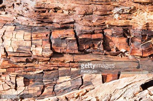 Decomposing wood, full frame : Stock Photo