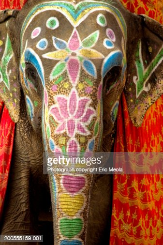 Decorated and painted elephant, front view : Stock Photo