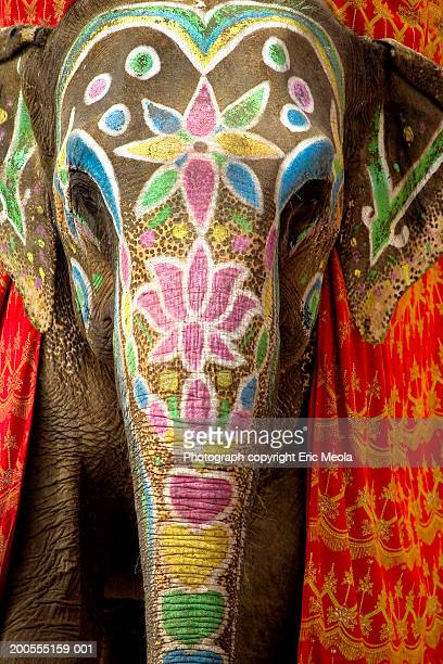 Decorated and painted elephant, front view