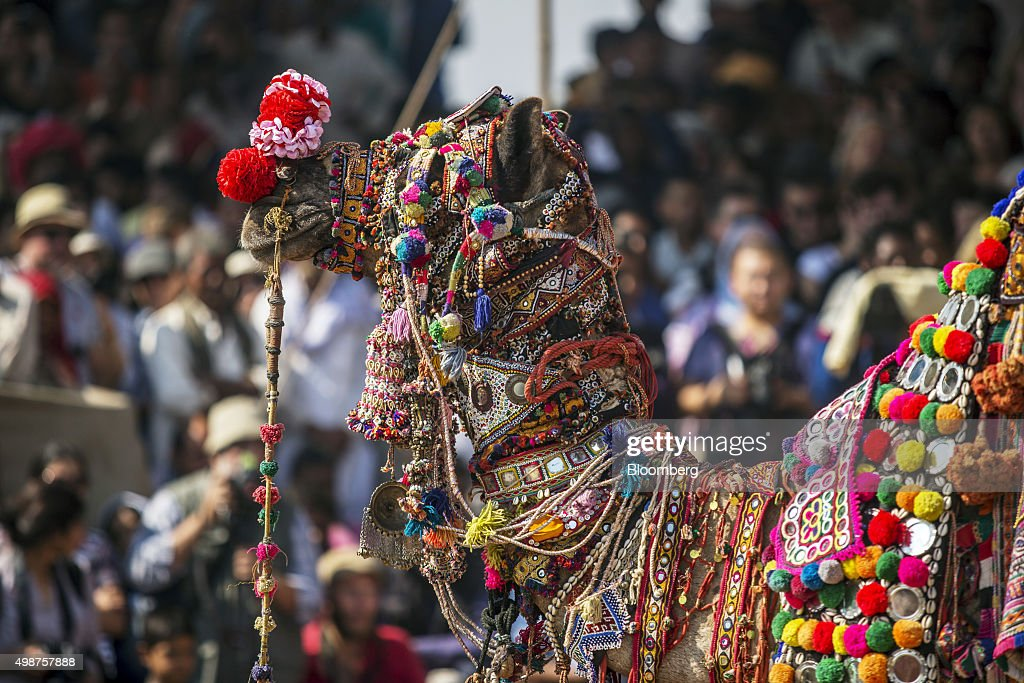 A decorated camel stands on show at the fairgrounds of the Pushkar Camel Fair in Pushkar Rajasthan India on Friday Nov 20 2015 Throw together...