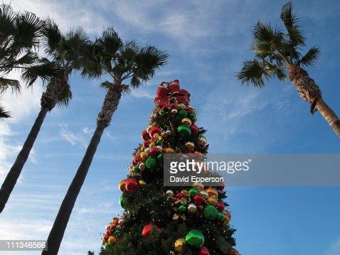 keywords christmas christmas tree - Christmas Tree Palm