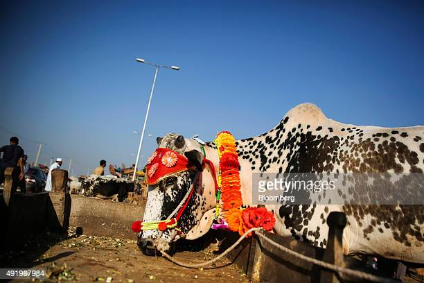 A decorated cow stands on sale at a livestock market in Islamabad Pakistan on Thursday Sept 24 2015 The South Asian nation's consumer price gains...