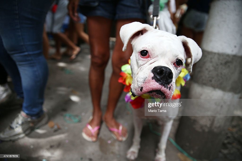 A decorated dog looks on at a 'bloco' party during pre-Carnival festivities on February 22, 2014 in Rio de Janeiro, Brazil. Carnival officially begins on February 28 but pre-festivities have already begun.