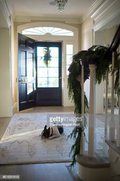 Decorated stair bannister with one of the two family's Boston Terriers in the home of Tom and Carla Crawford this year's Washington Post Holiday...