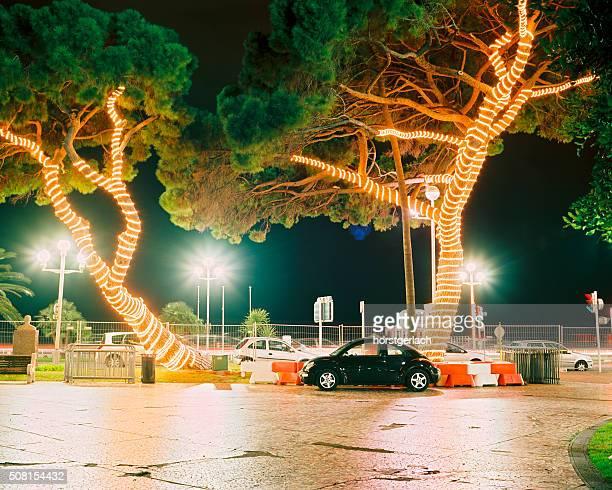 Die Bäume in Nizza, Frankreich