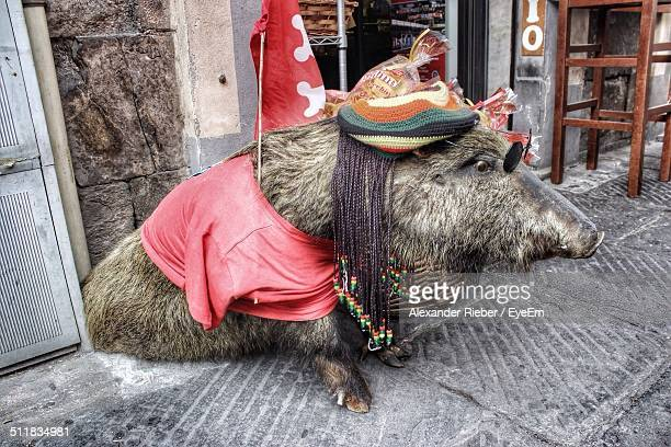Decorated wild boar on the street