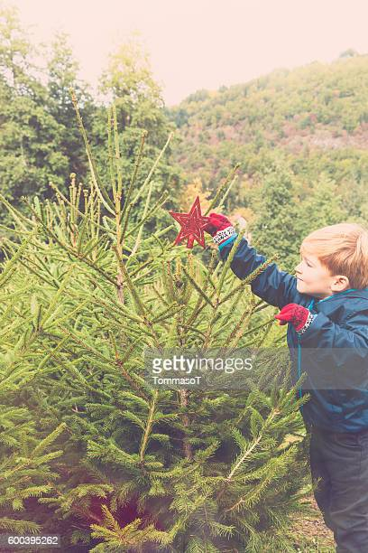 decorating the christmas tree outdoor