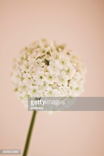 Decoration flower : Stock Photo