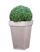 Decorative bush in a pot isolated over white