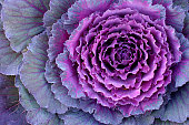 Its Kale, a decorative cabbage.