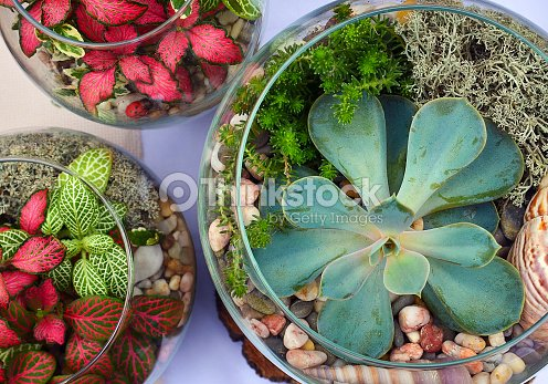 Decorative Glass Vases With Succulent And Cactus Plants Stock Photo