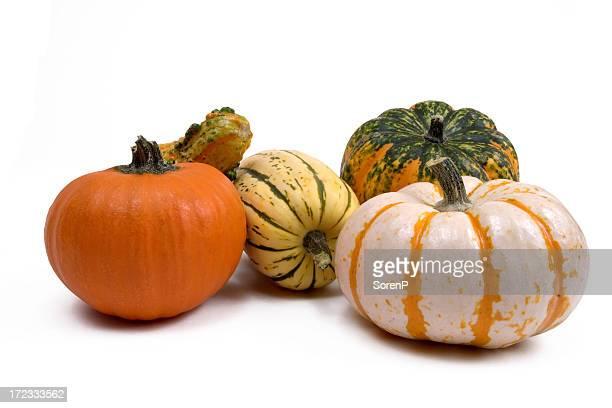 Decorativo Gourds