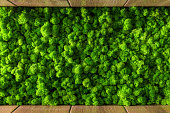 decorative moss for interior decoration. design moss elements background clodse up.