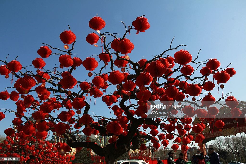 Decorative red lanterns hang from a tree at Ditan Park to greet the Lunar New Year on February 7, 2013 in Beijing, China. Fall on February 10 this year, the Chinese Lunar New Year, also known as the Spring Festival, which is based on the Lunisolar Chinese calendar, will be celebrated from the first day of the first month of the lunar year and ends with Lantern Festival on the Fifteenth day.