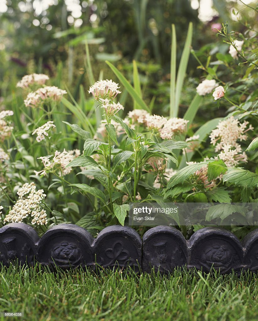 Decorative Scalloped Garden Edging : Stock Photo