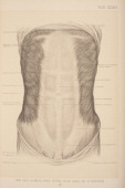 Deep fascia cutaneous nerves external oblique muscles and its aponeurosis 1903 From 'Surgical Anatomy The Treatise of the Human Anatomy and Its...
