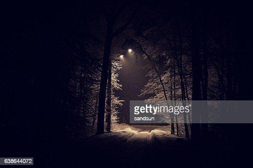 deep foresta : Foto stock