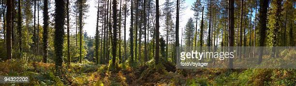 Profondément dans le bois
