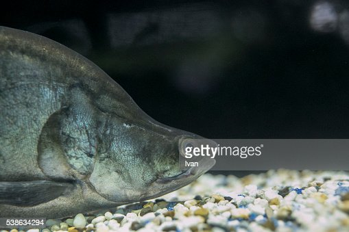 Deep Sea Fish with Protective Coloration