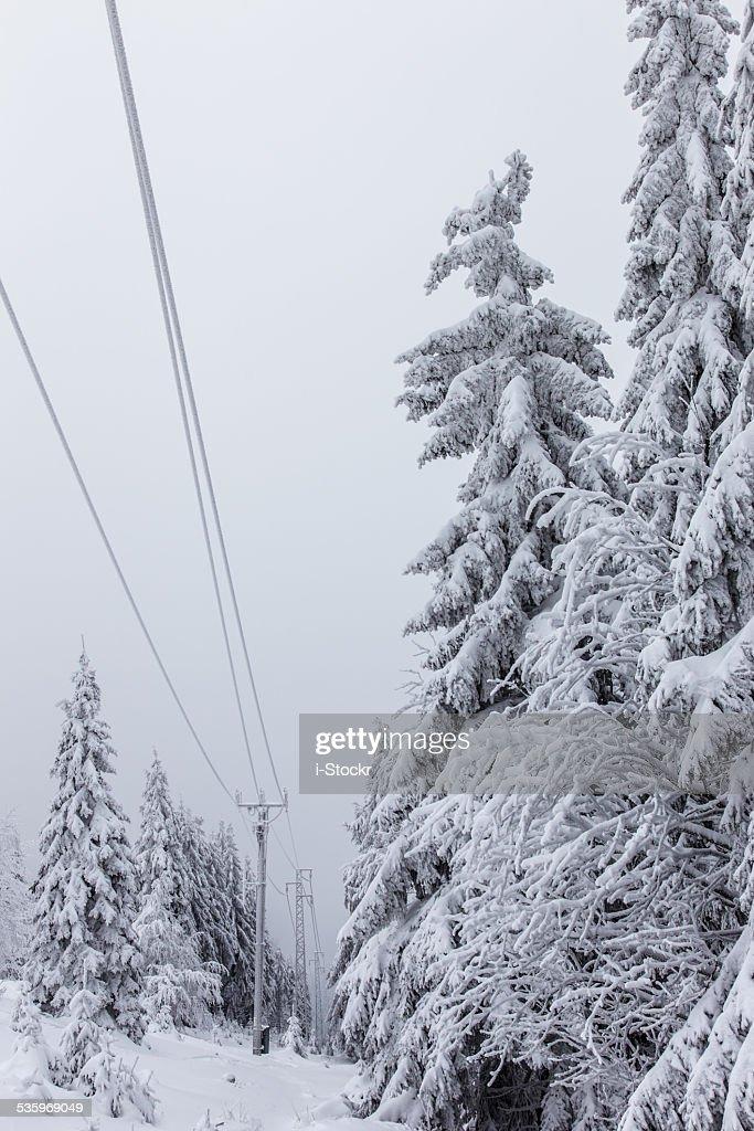 Deep winter : Stock Photo