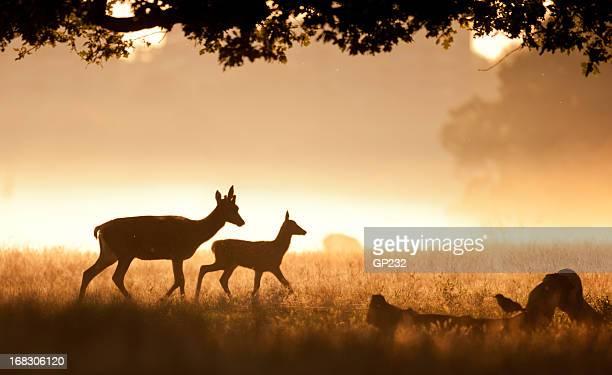 Deer und beige