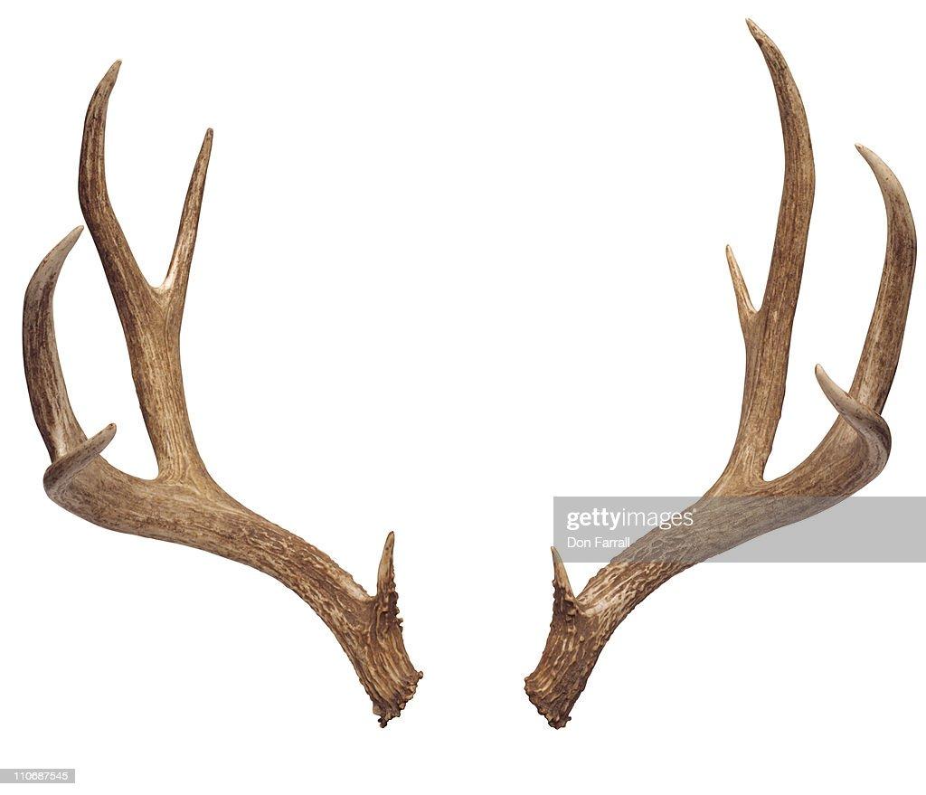 Deer Antlers Stock Photo | Getty Images