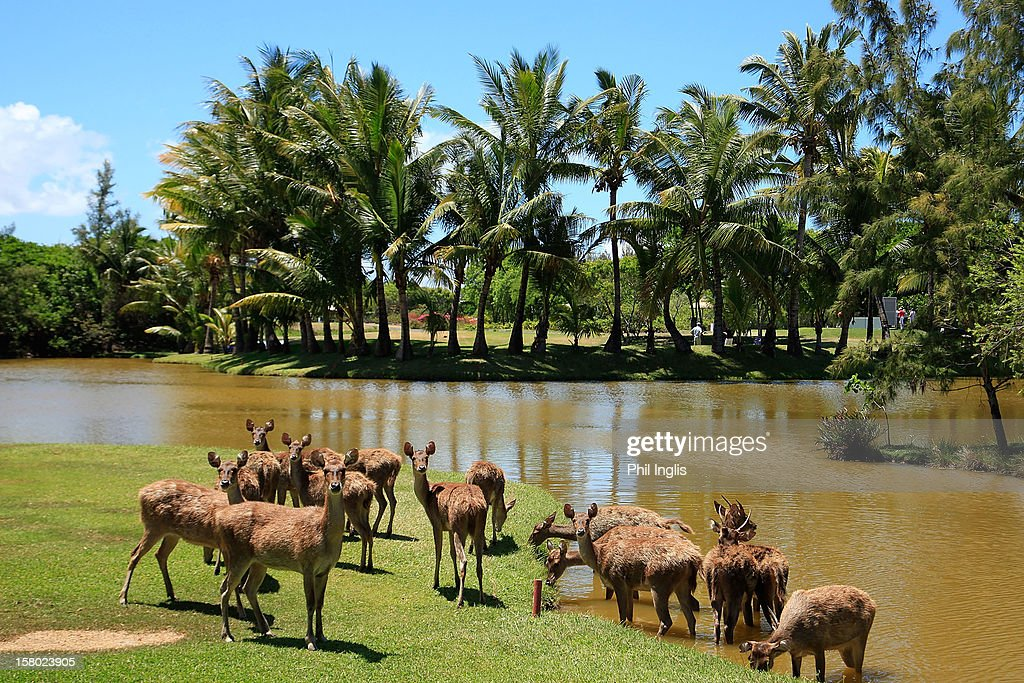Deer cross the 6th fairway during the final round of the MCB Tour Championship played at the Legends Course, Constance Belle Mare Plage on December 9, 2012 in Poste de Flacq, Mauritius.
