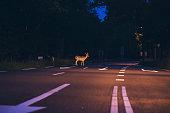 Deer crossing the road at dawn